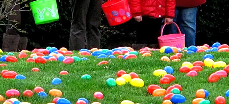 Поиск яиц