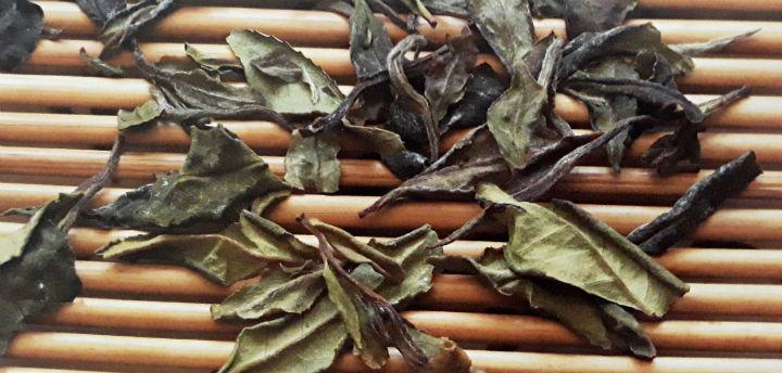 Чайные листья на ферментации