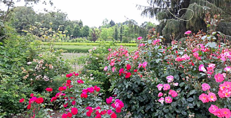 Arboretum-rozarij