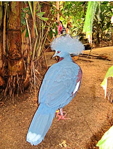 Zal ekzoticheskihм ptits