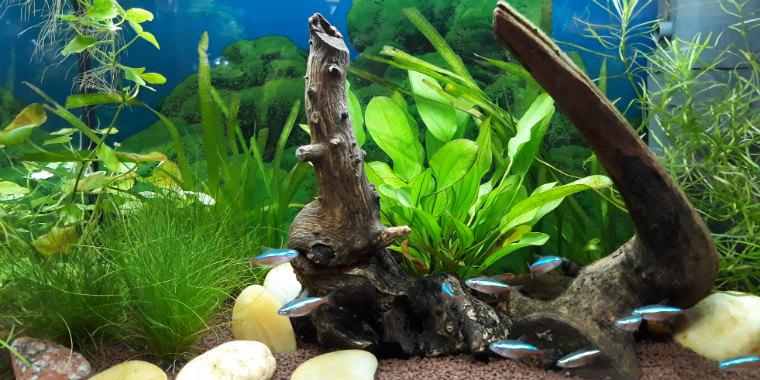 Аквариум с рыбками