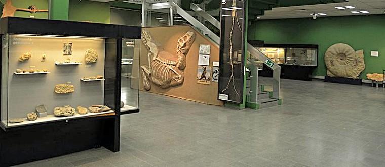 Окаменевшие останки динозавров и морских обитателей