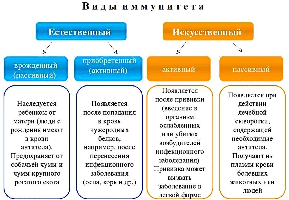 Схема видов иммунитета