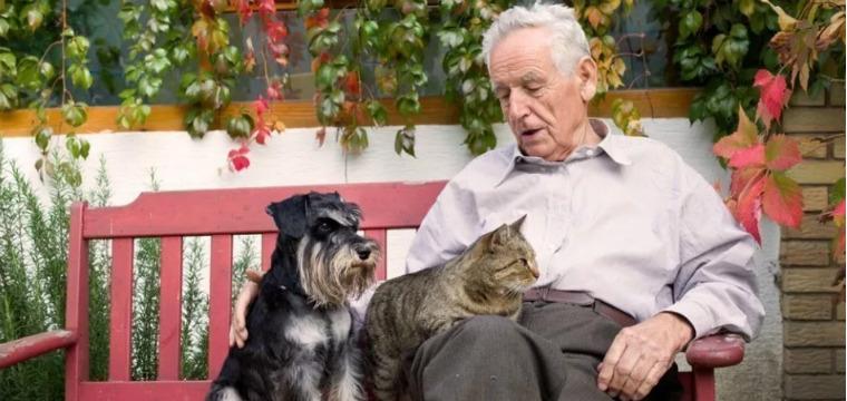 Собака, кошка и человек