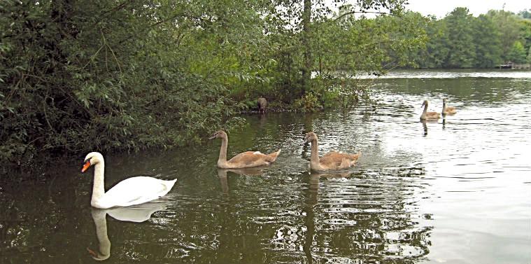 Водоплавающие в Лягушачьем пруду
