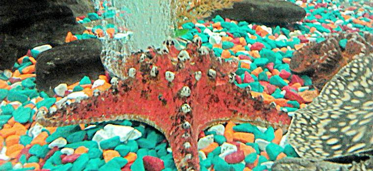 Оформление в виде морской звезды