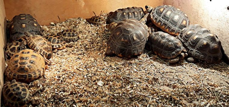 Среднеазиатские черепахи