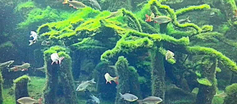 Обитатели устья Везера