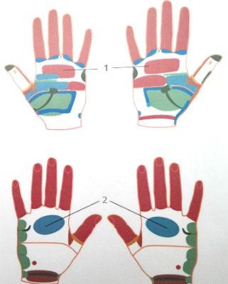 Рефлекторные зоны легких и бронхов на кистях