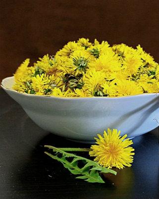 Цветки одуванчиков для меда