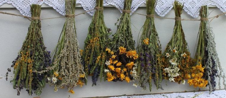 Успокаивающие травы
