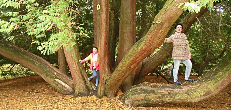 Многовековые деревья