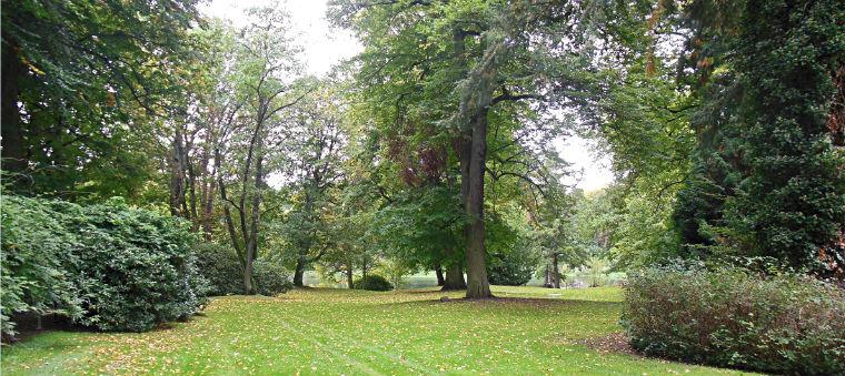 Парк у замка Райнбек