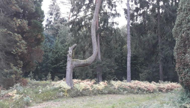 Часть Люнебургской пустоши