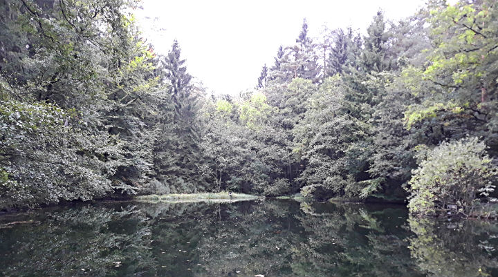 Лесной пруд сказок