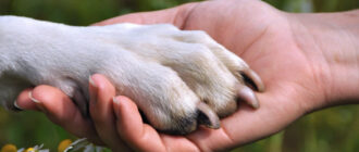 Лечение животными