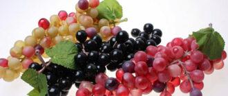 Виноград темный