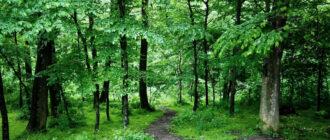 Живые деревья леса