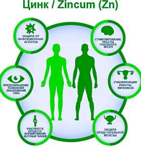 Цинк-роль в организме