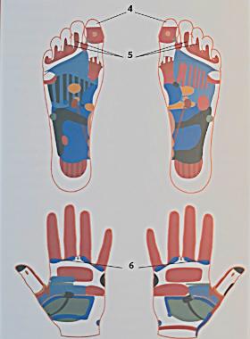 Рефлекторные зоны на руках и ступнях