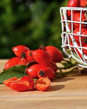 Плоды шиповника-медь для организма