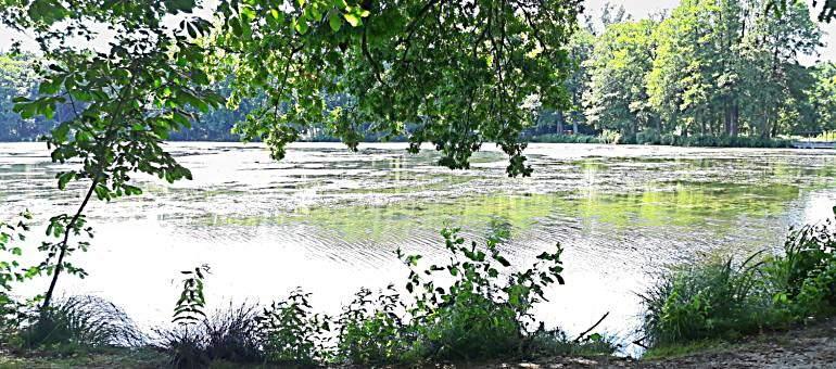 Живая природа у озера