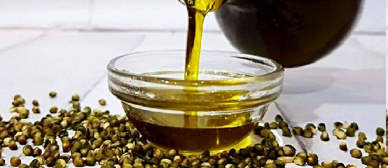 Семена и масло конопли