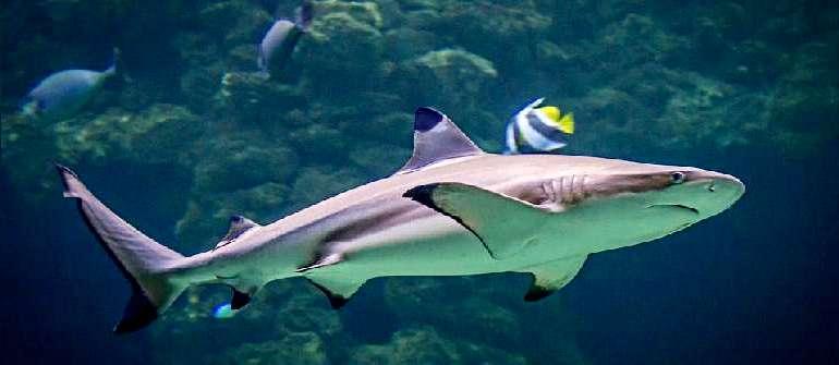 Хищница моря — акула