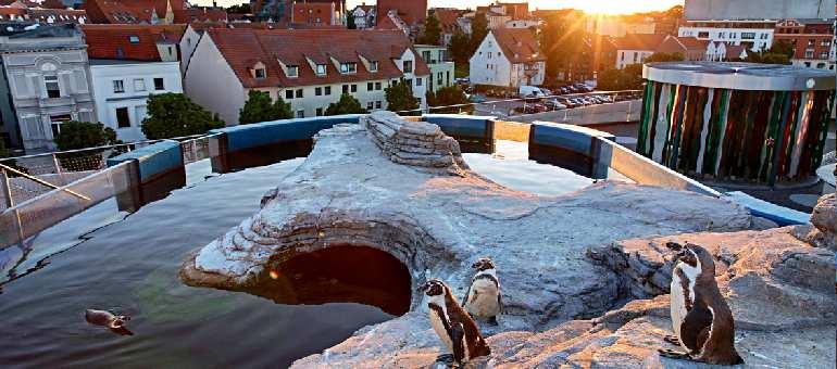 Терраса с пингвинами на крыше Океанариума