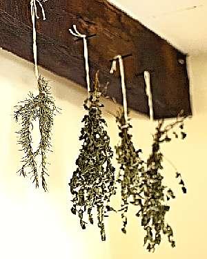 Хранение сушеных дикорастущих трав