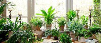 растения комнатные на подоконнике